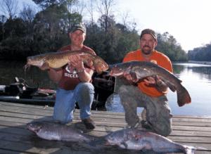 Limblines for Big Alabama Catfish